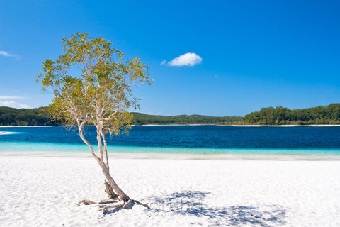 Photos of Lake McKenzie FI3315 - Gusha