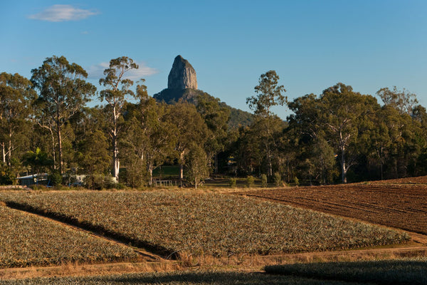 Photo of Glass House Mountains GHM2071 - Gusha
