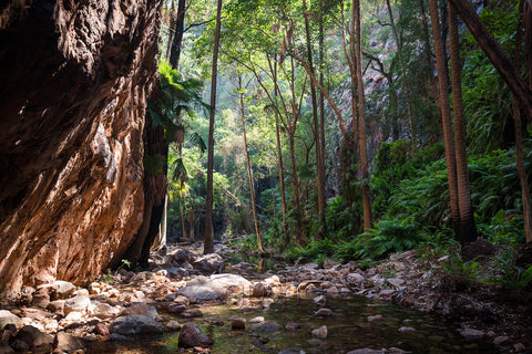 This narrow gorge walk features beautiful stands of palm trees and ferns. An cool escape from the outback sun.
