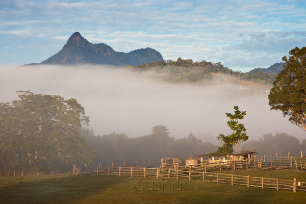 Photo of Mt Warning MU2279 - Gusha