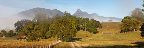 Photo of Mt Warning MU2573 - Gusha