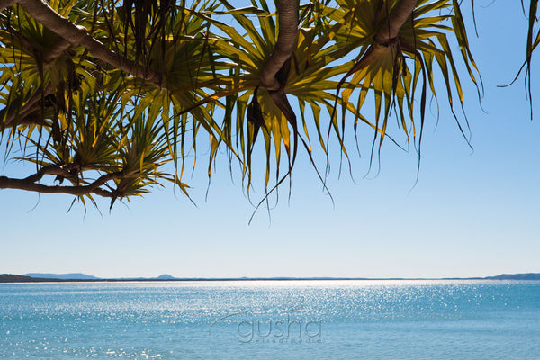 Photo of Pandanus Palms NO2145 - Gusha