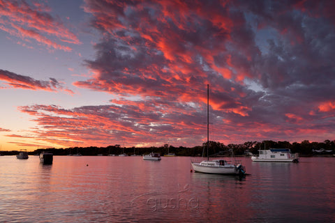 Photo of Noosa River NO2151 - Gusha