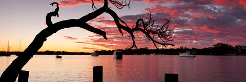 Photo of Noosa River NO2154 - Gusha