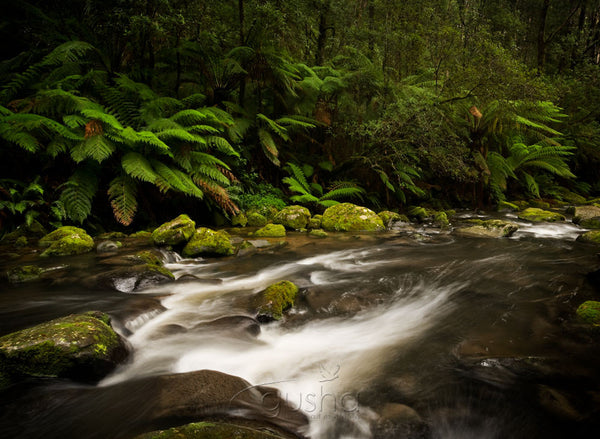 Photo of Otway National Park OT0732 - Gusha