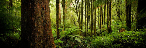 Photo of Otway National Park OT0734 - Gusha