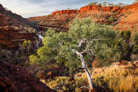 Dales Gorge photo