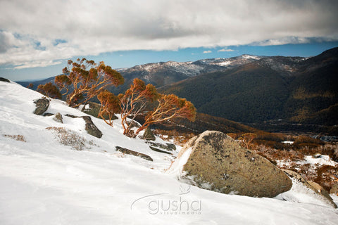 Photo of Thredbo SN2409 - Gusha