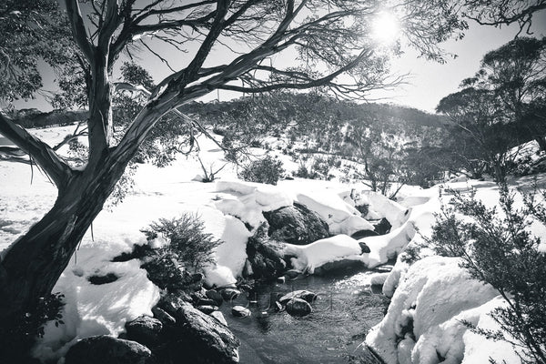 Thredbo River black and white Photo
