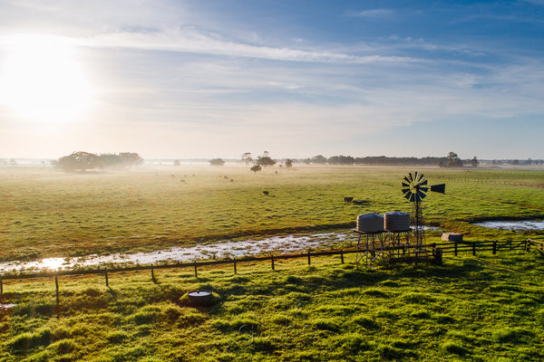 Early morning mist lifts off farmland at Kincela near the banks of the Macleay River.