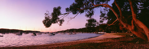 Photo of Clareville Beach SYD0593 - Gusha