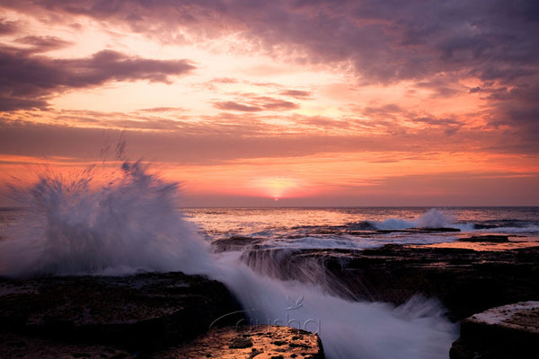Photo of North Narrabeen Sunrise SYD0596 - Gusha