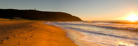 Photo of Palm Beach SYD0627 - Gusha