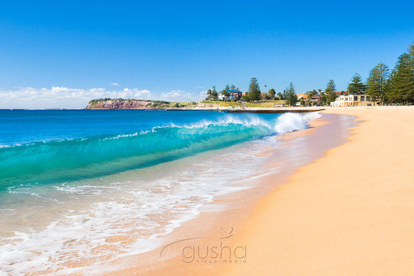 Photo of Collaroy Beach SYD0648 - Gusha