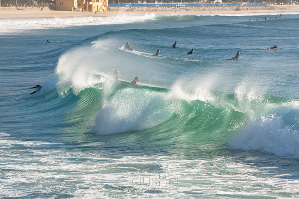 Photo of Manly Beach SYD1321 - Gusha