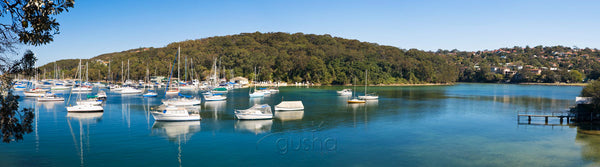 Photo of North Harbour SYD2261 - Gusha