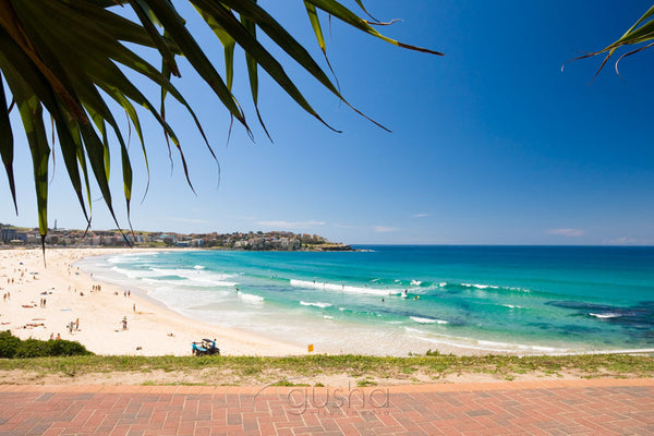 Photo of Bondi Beach SYD2296 - Gusha