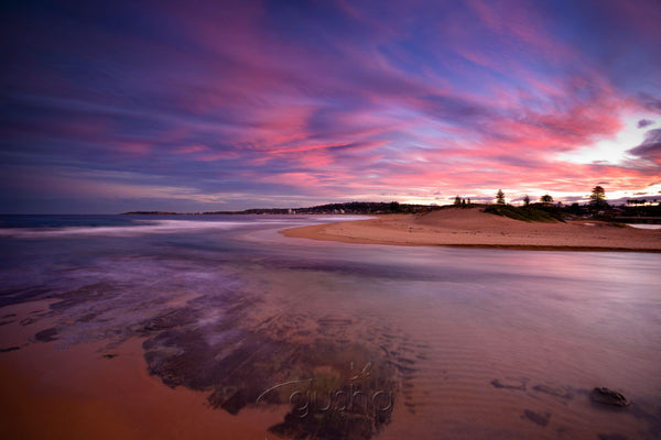 Photo of Narrabeen Beach SYD2717 - Gusha