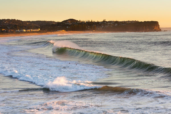 Photo of Warriewood Beach SYD2876 - Gusha