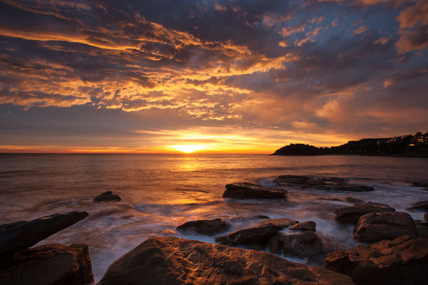 Photo of Fairy Bower Sunrise SYD3088 - Gusha