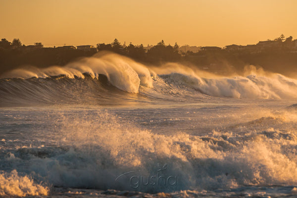 Photo of Mona Vale Beach SYD3110 - Gusha