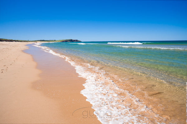 Photo of Dee Why Beach SYD3269 - Gusha