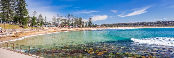 A photo of Dee Why Beach Reserve, at the southern end of the beachfront, has been developed into a family haven with secure playgrounds, expansive walkways and grassed areas, lined with century-old Norfolk Pines.