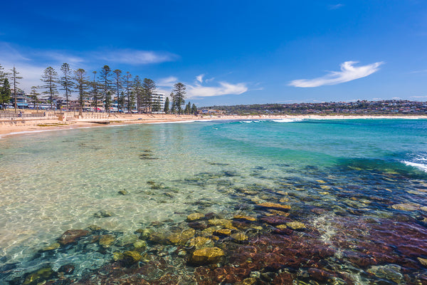 Dee Why Beach photo