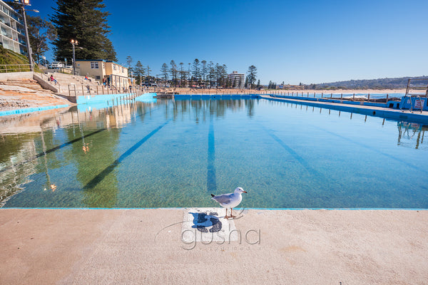 A photo of a young inquisitive seagull at the edge of Dee Why Pool in Sydney, Australia.