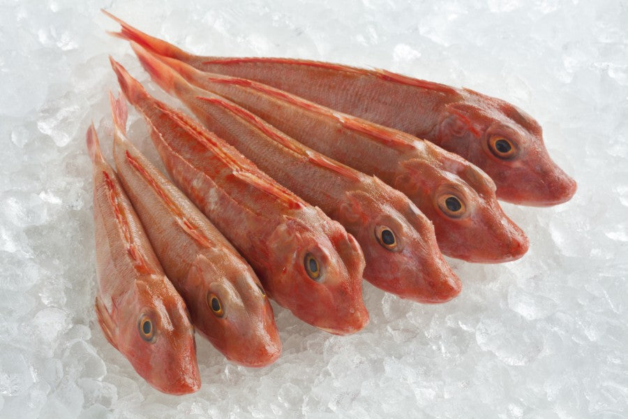 The Odd-looking Fish: Red Gurnard