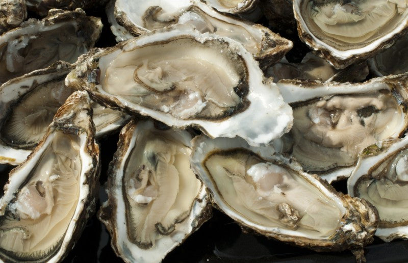 Things You Need To Know About Shellfish