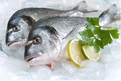 Buy Fresh Fish Online - Guilt Head Bream