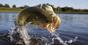 Smallmouth or Largemouth - Landing All Bass Will Be Easy