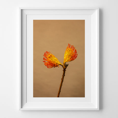 SPLIT POPPY ART PRINT
