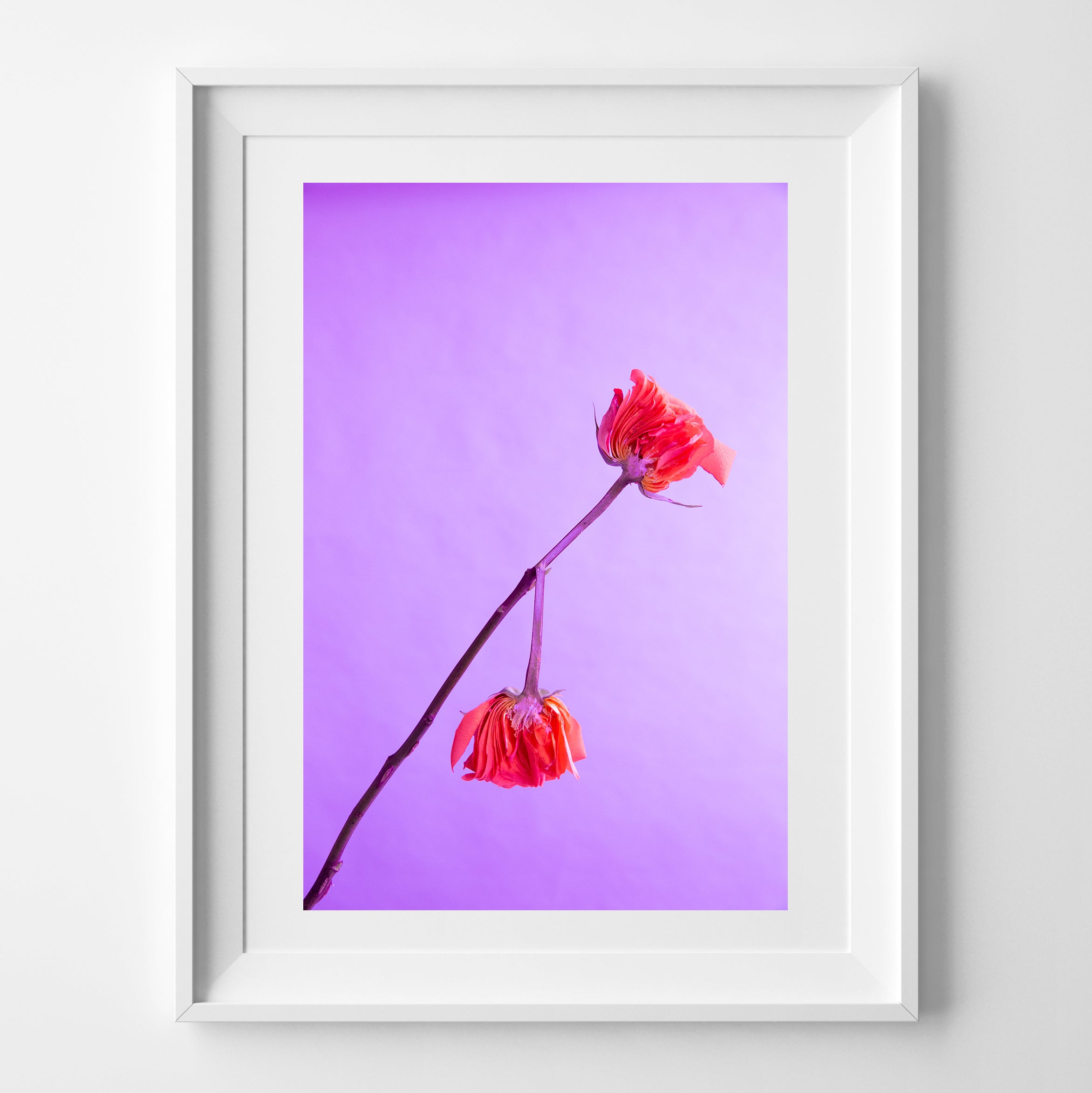 SPLIT ROSE ART PRINT