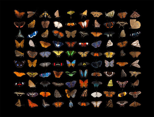 National Geographic Photo Ark - Butterflies 1000 Piece Jigsaw Puzzle - All Jigsaw Puzzles