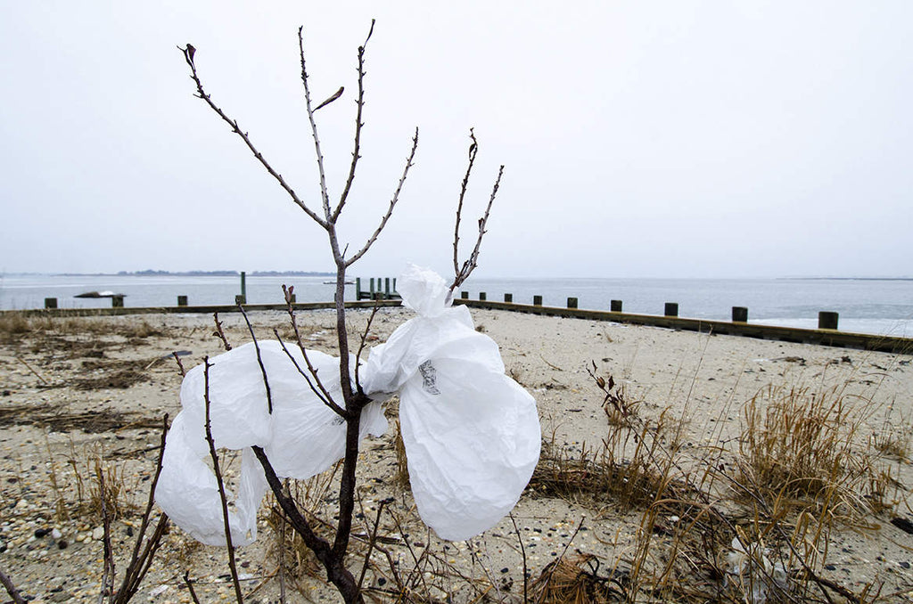 Plastic Bag Bans