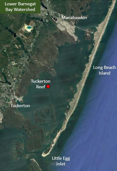 Tuckerton Reef