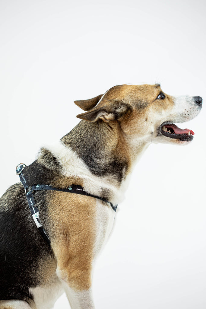 Jetty - DYOL Dog Harness