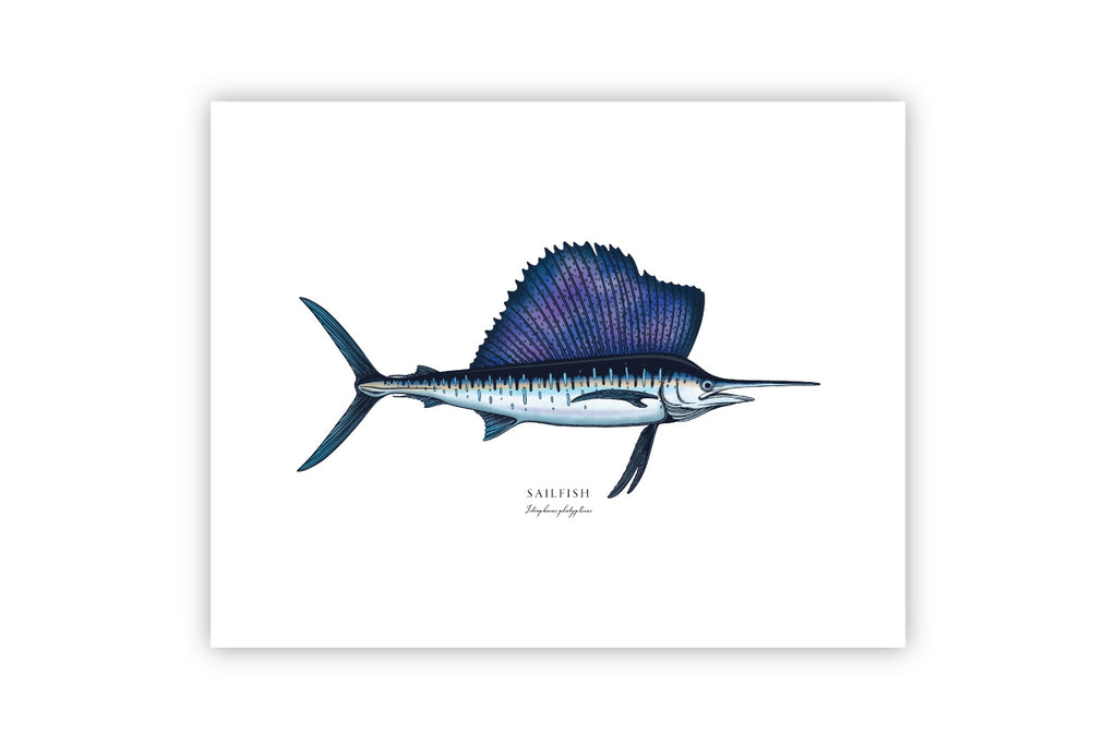 11x14 Bold Coast Burns Print - Sailfish