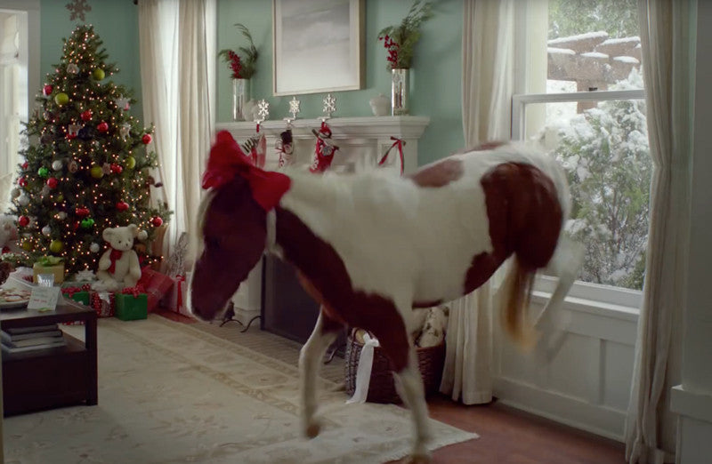 So You Bought a Pony for Christmas.  Now What?