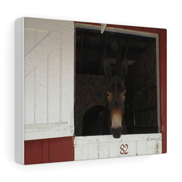 Brown Mule in Barn Canvas Gallery Wraps Western Wall Art