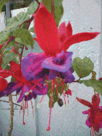 fuchsia flower counted cross stitch pattern