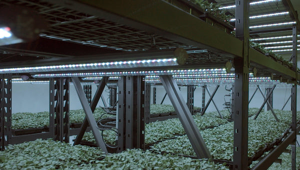 Supplemental Grow Lighting Proven to Significantly Boost Yields