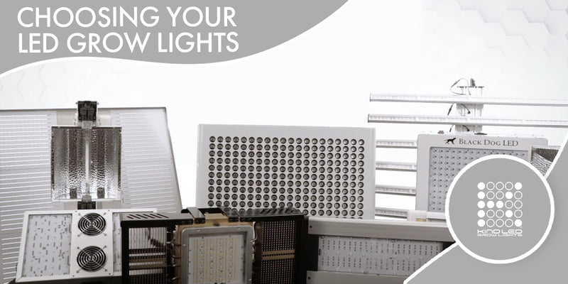Choosing the Best LED Grow Lights
