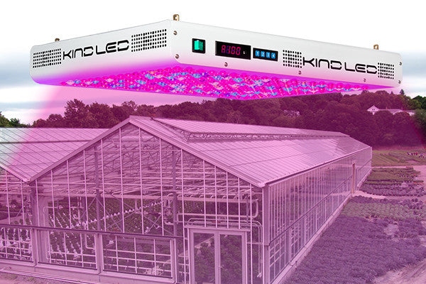 Commercial Gardeners Switching to LED Grow Lights as Greenhouse Grow Lights of Choice