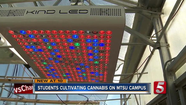 University Chooses Kind LED Grow Lights For Legal CBD Cannabis Research