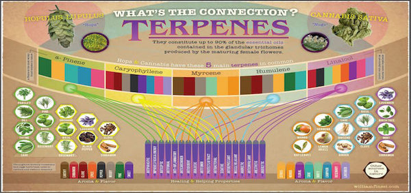 What are Terpenes and what do they mean to me as a Grower?