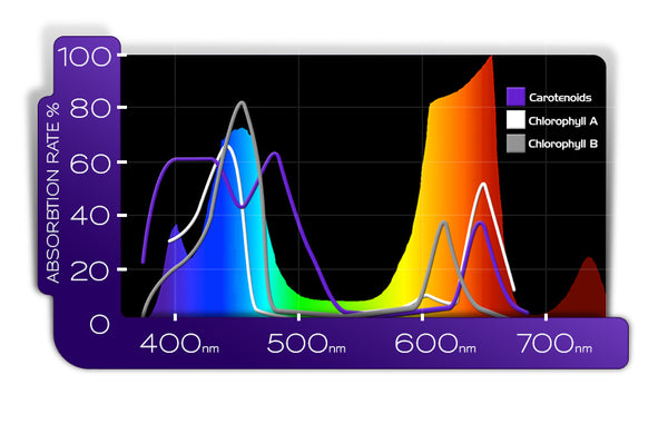 plant absorption from kind led indoor grow lights