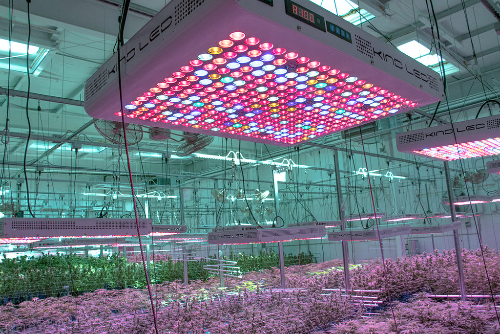 Recreational Cannabis States Turn To LED Grow Lights To Optimize Yields